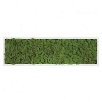 Картина из стабилизированного мха (Green) 20x70