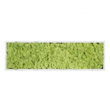 Картина из стабилизированного мха (Forest) 20x70