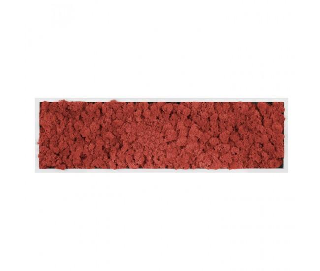 Картина из стабилизированного мха (Red) 20x70