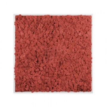 Картина из стабилизированного мха (Red)