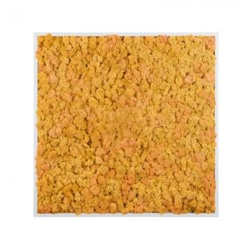 Картина из стабилизированного мха (Yellow)