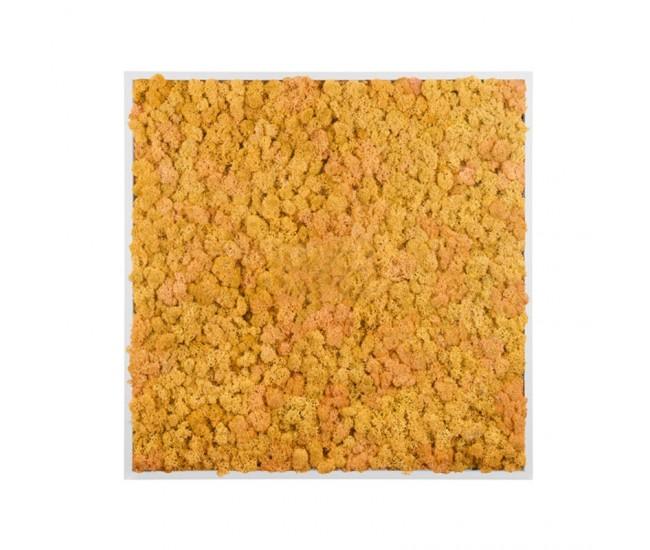 Картина из стабилизированного мха (Yellow) 80x80