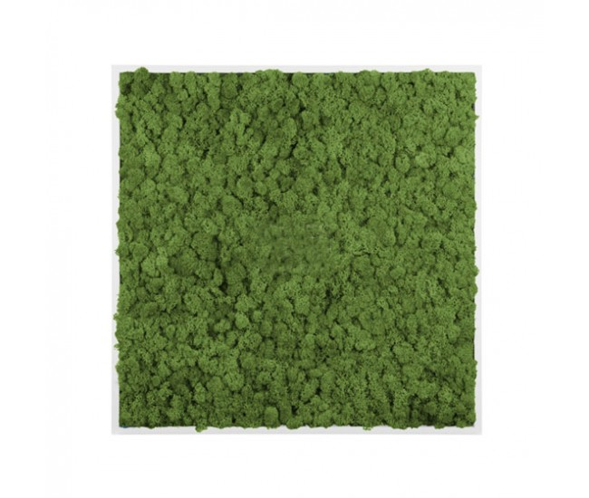 Картина из стабилизированного мха (Green)